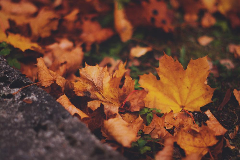 Høstblader ute-6psKOMP.jpg