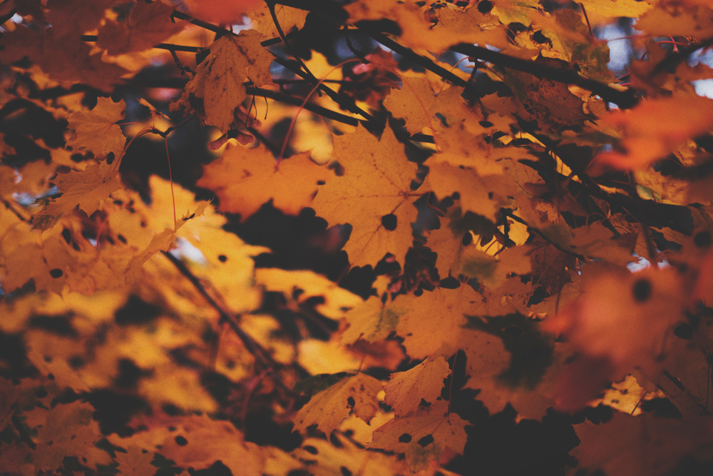 Høstblader ute-3ps2KOMP.jpg