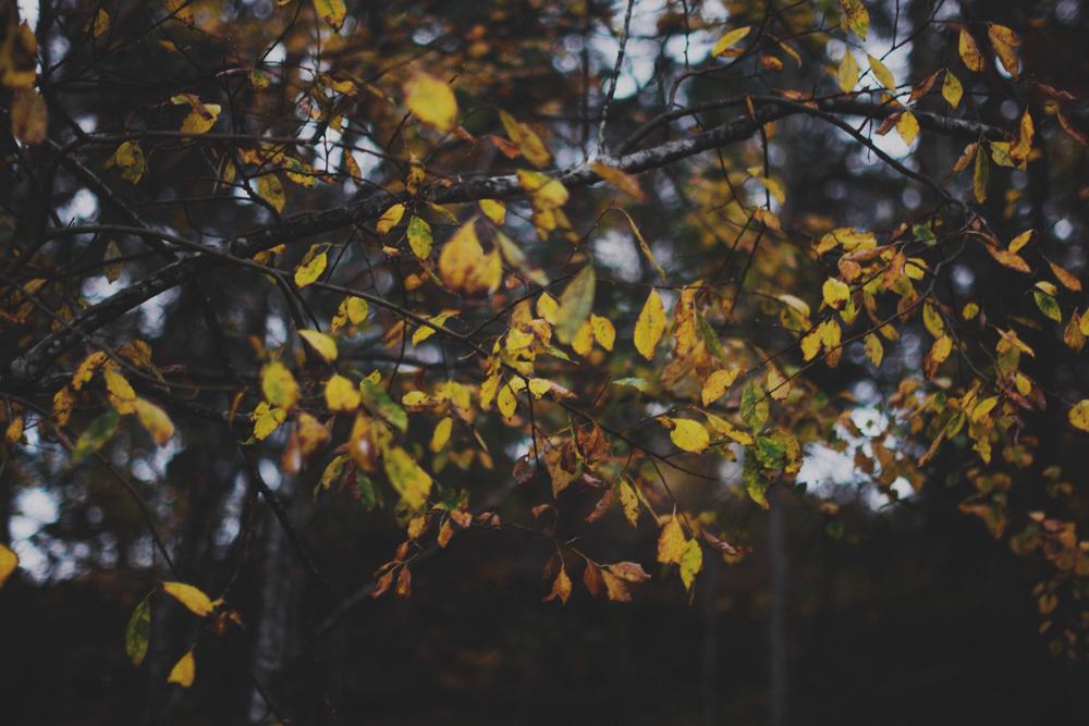 Høstblader ute-17ps.jpg