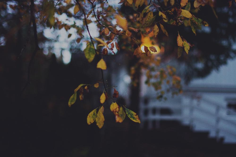 Høstblader ute-19ps.jpg