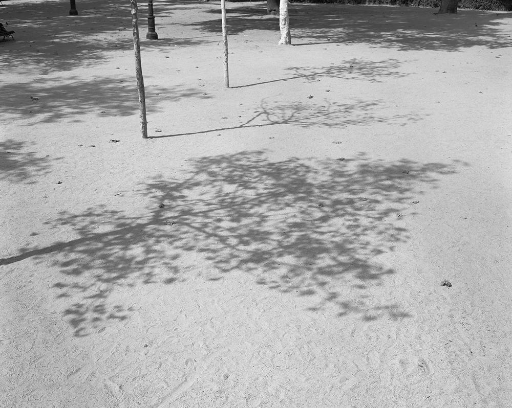 Shadow, 2014