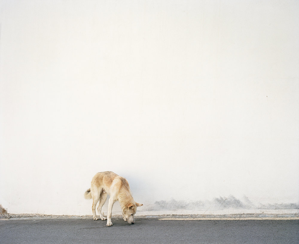 Dog Wall Screen Res.jpg
