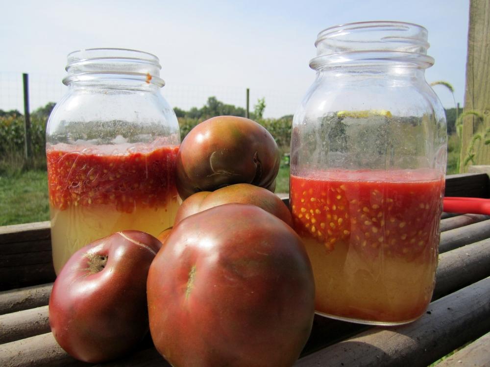tomato_seeds_fermenting.JPG