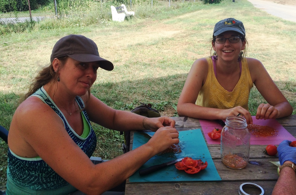 Susan Hereth of Hudson Valley Seed and Nicole Cardish of Mill Road Primary School harvest seeds from Glacier Tomatoes.