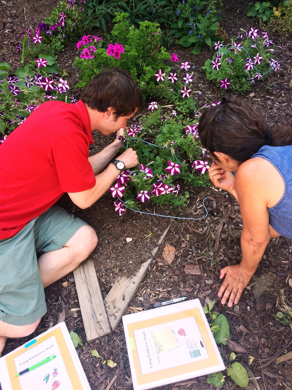 Muriel Horowitz  taught educators how to use wonder circles to investigate a small patch of ground during her session titled Literacy in the Garden at the 2015 Using Gardens to Teach Summer Institute.