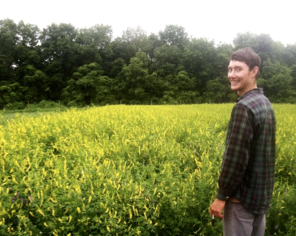 Patrick admires a healthy stand of sweet yellow clover, which is also adored by bees.