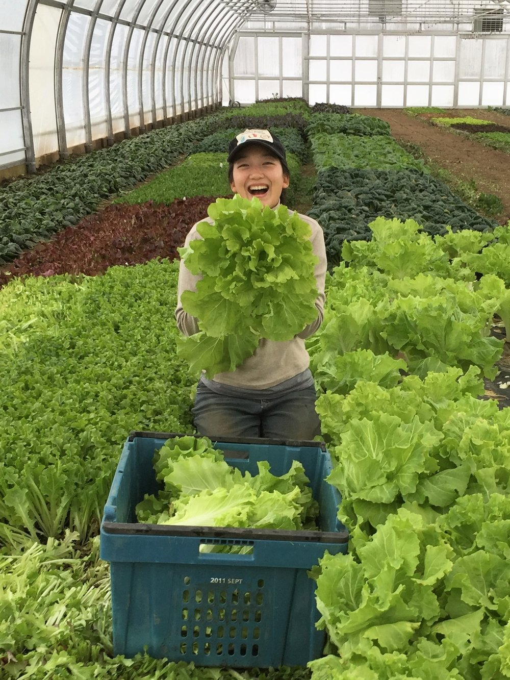Katherine harvest.JPG