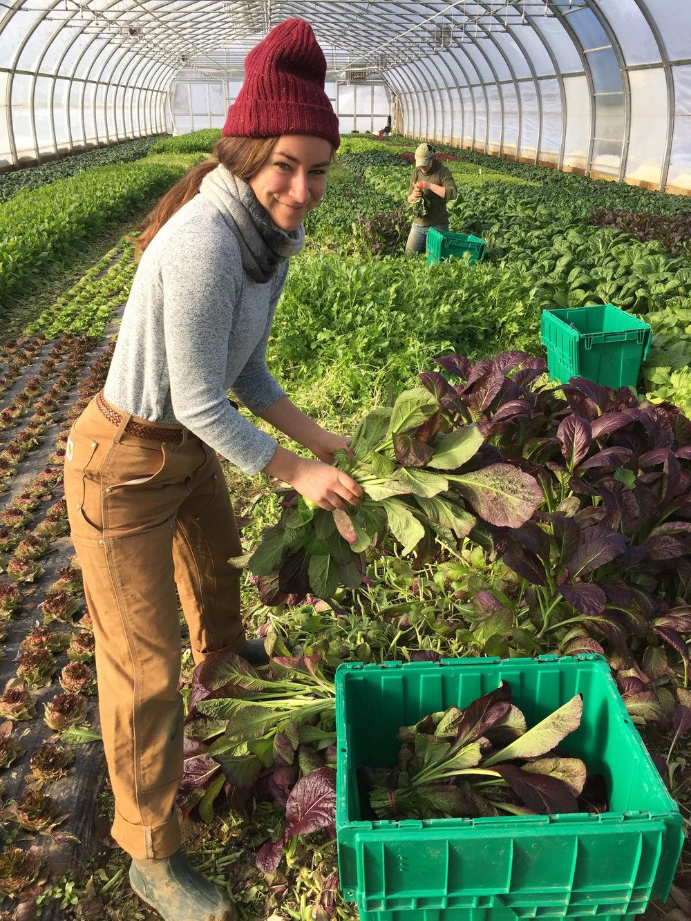 poughkeepsie farm project Workshops events by poughkeepsie farm project pfp is a non-profit organization & member supported csa farm that works toward a.