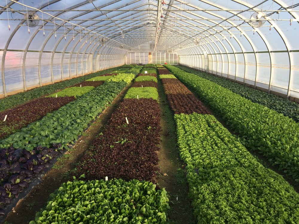 Open Farm and Plant Sale Days!    Saturdays, May 6 & 13, 9am - 2pm    Learn More