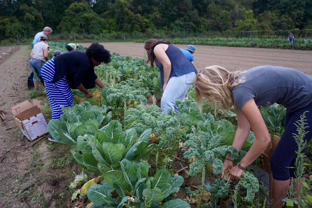 Photo credit: Eilif Ronning, PFP Media Intern PFP interns and workshop participants hard at work gleaning fresh leafy greens