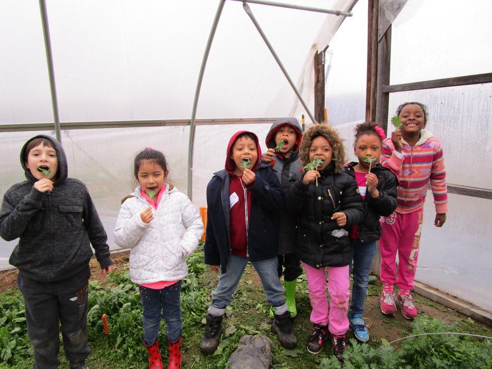 kids kale tunnel.JPG