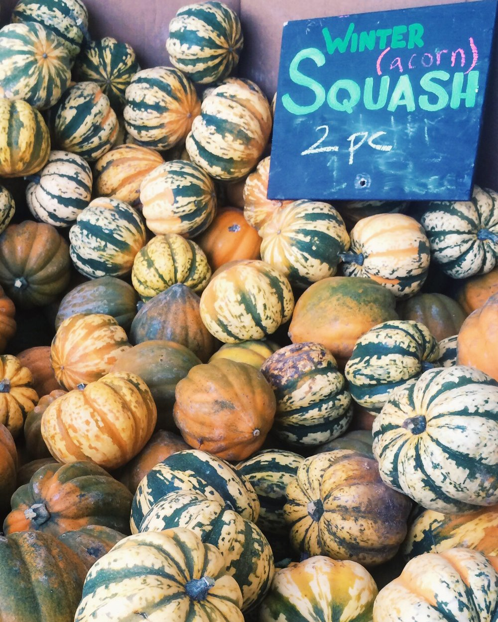 Harvest Winter Squash.JPG
