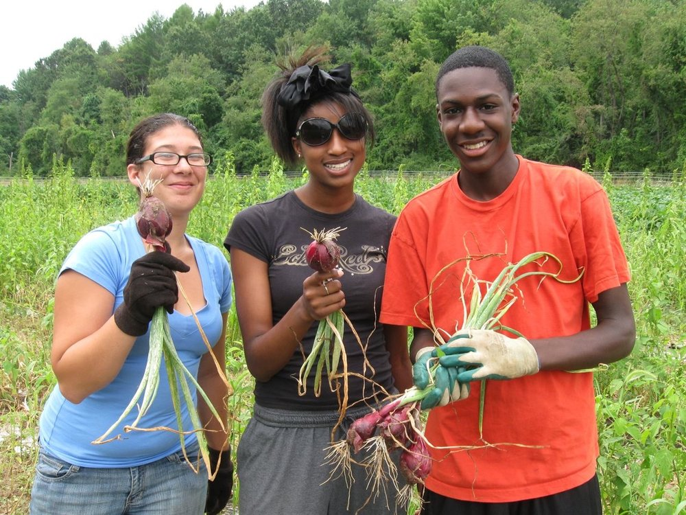 harvest farm_visit_onions_GT.jpg