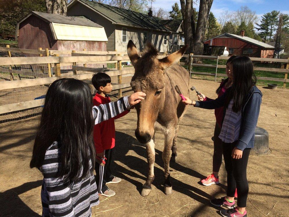 Donkey pic.jpg