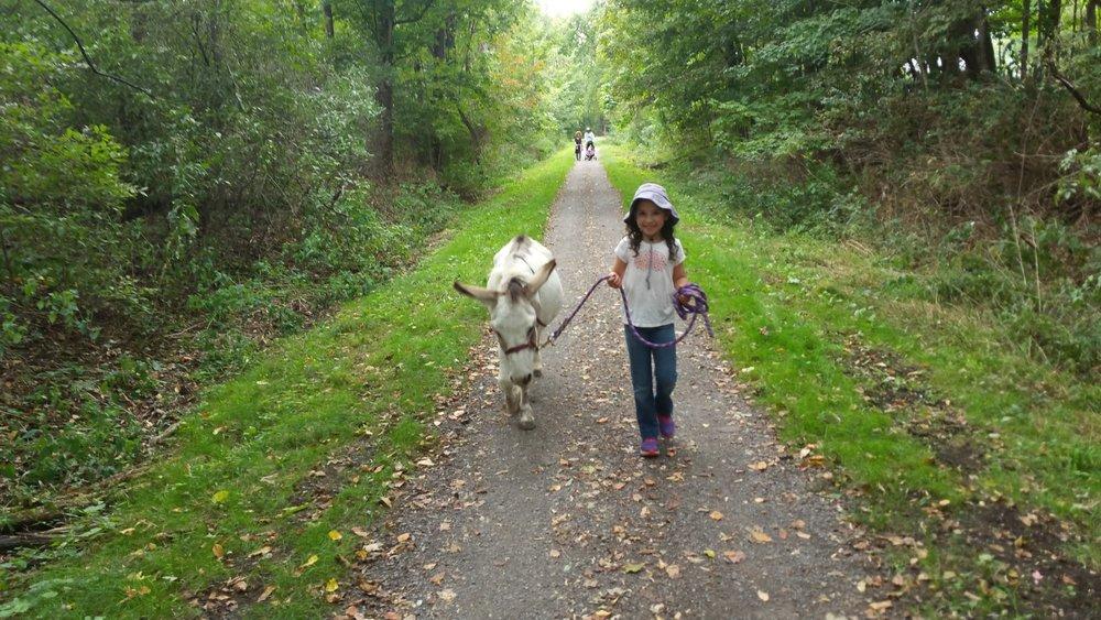 donkey pic 2.jpg