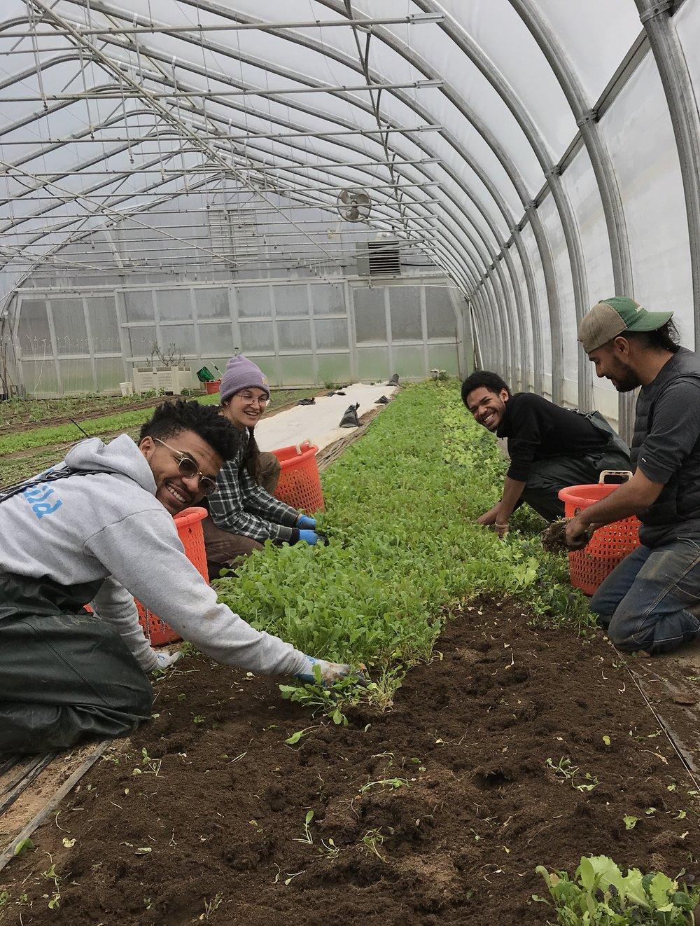 green jobs 5.jpg