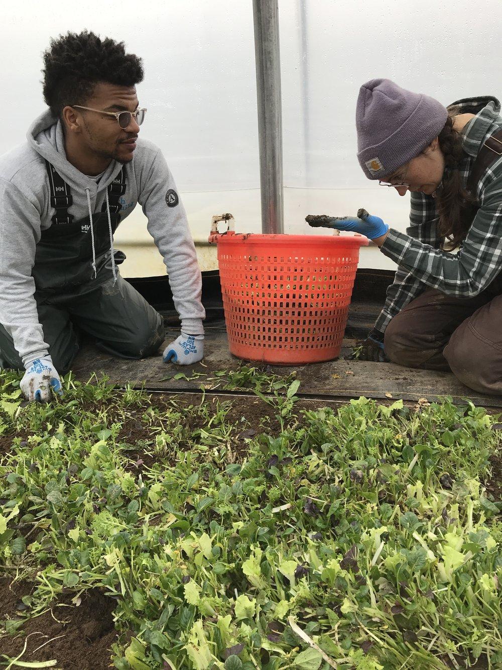 green jobs 4.JPG
