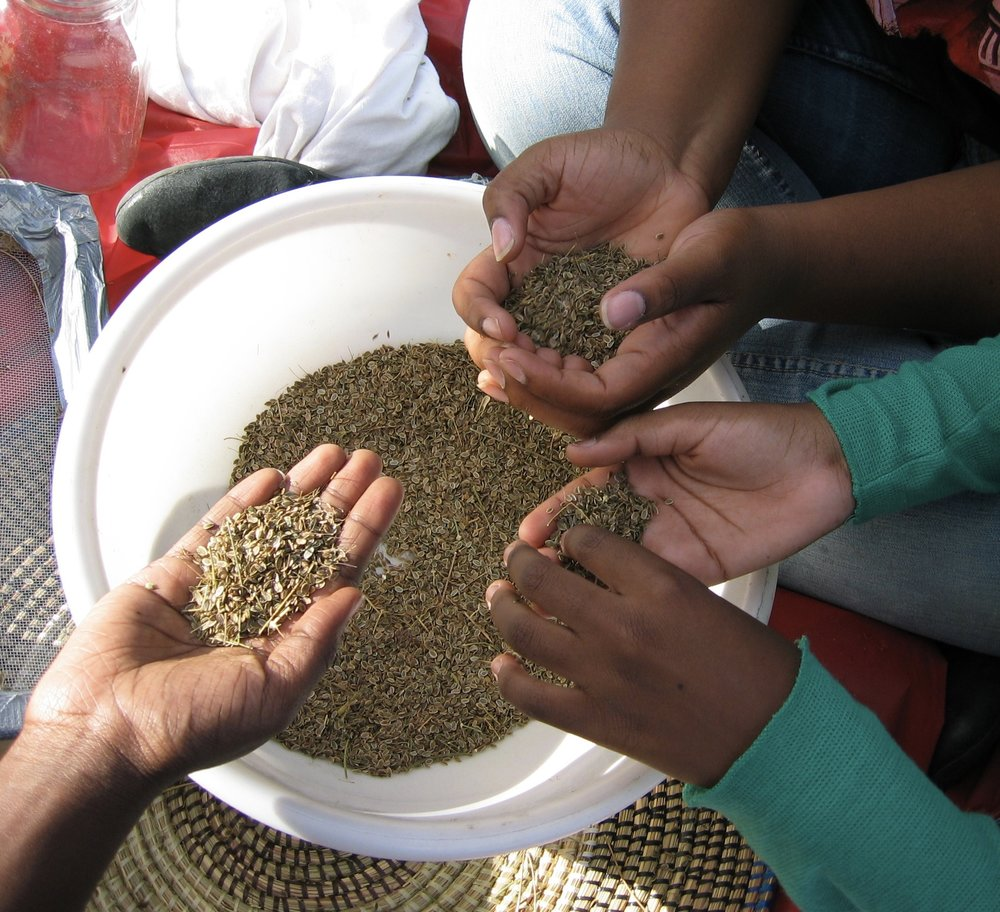 seed saving 10.jpg
