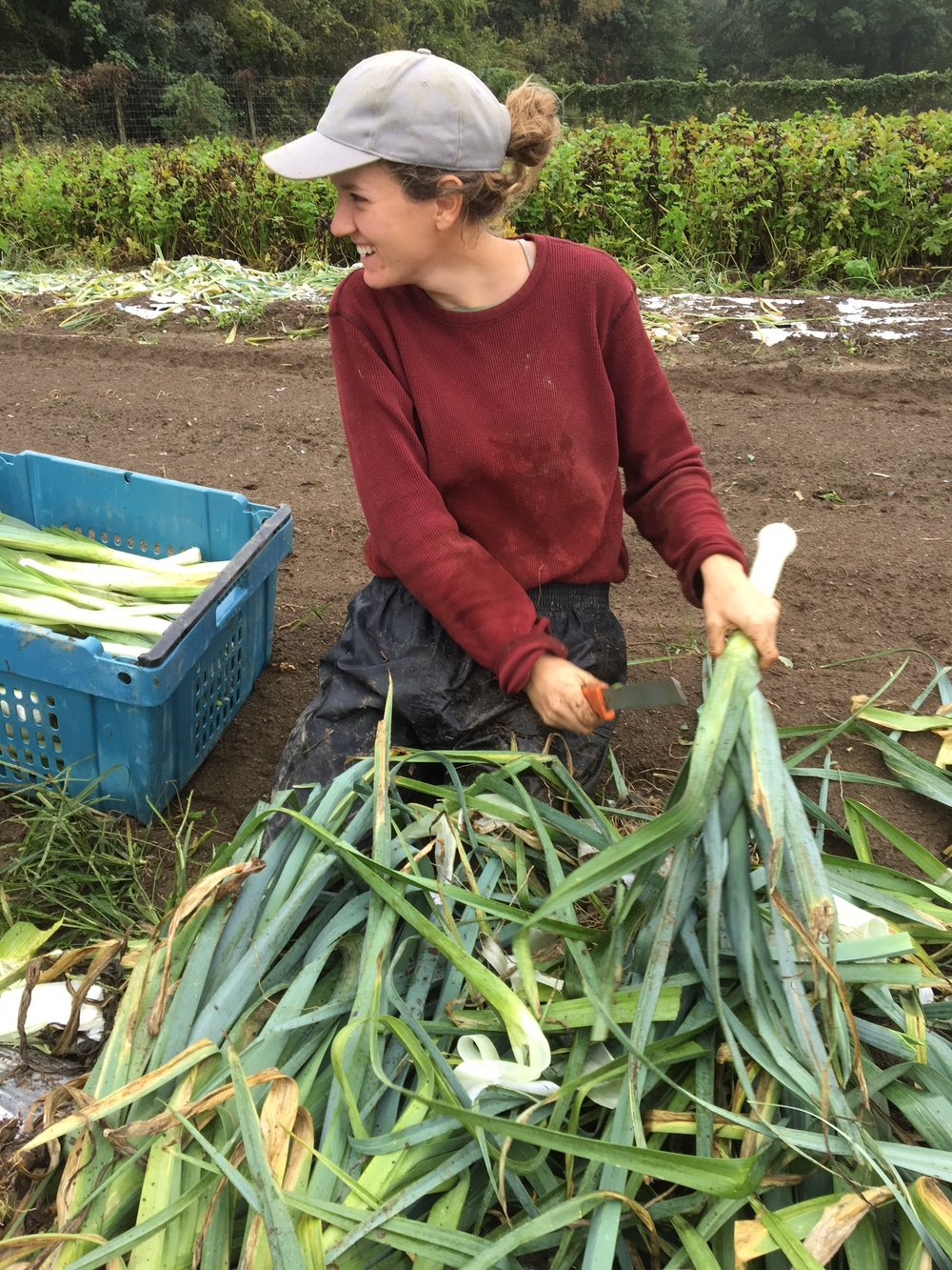 Laura harvesting the last of our leeks