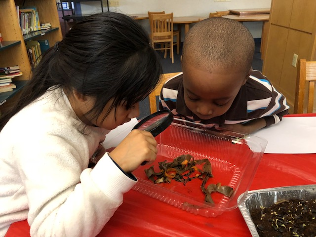 Students learn about worms, vermicomposting, and caring for a classroom worm bin.
