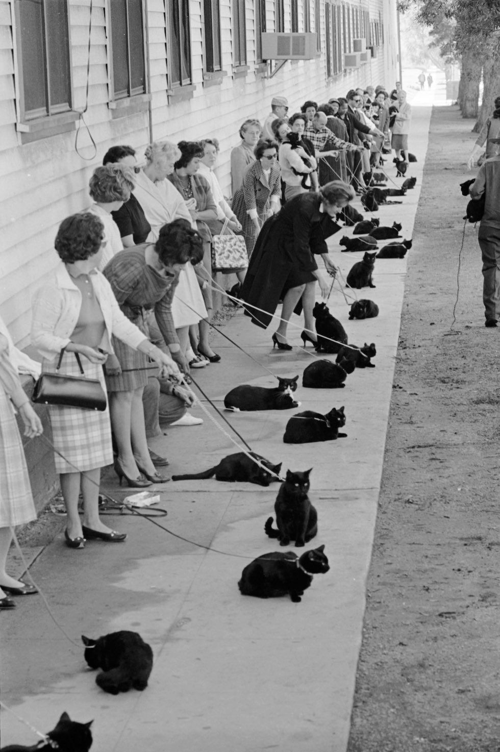 black-cat-audition-vintage-hollywood