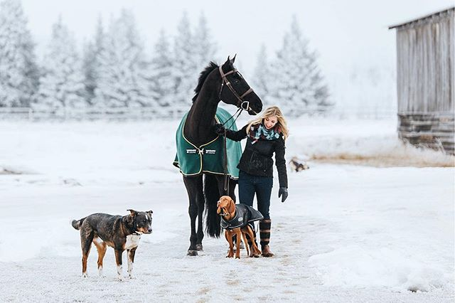 This snowy winter sure is great for amazing sessions! So are herds of adorable puppies! Happy Sunday! #yychorses . . . . . . #equestrianphotographer #horsepower #horsehead #horse #horsesofinstagram #instahorse #lifebetweentheears #dressage #dressagehorse #equestrianstyle #equestriangoals #equestrianism #equestrianlifestyle #showhorse #equestrianphotography #equestrianphotochallenge #horselover #horsegirls #puppylovers #dogsofinstagram #barndog #yycliving #winterwonderland