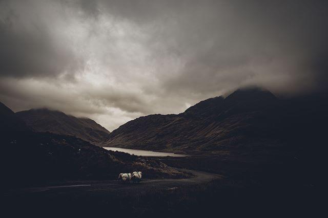 Driving home… . . . . . . . #vsco #vscotravel #landscape #liveauthentic # live_folk #nature #ireland #sheep #photographymood #photofever #iger_4every1 #transfer_visions #littlebitofnature