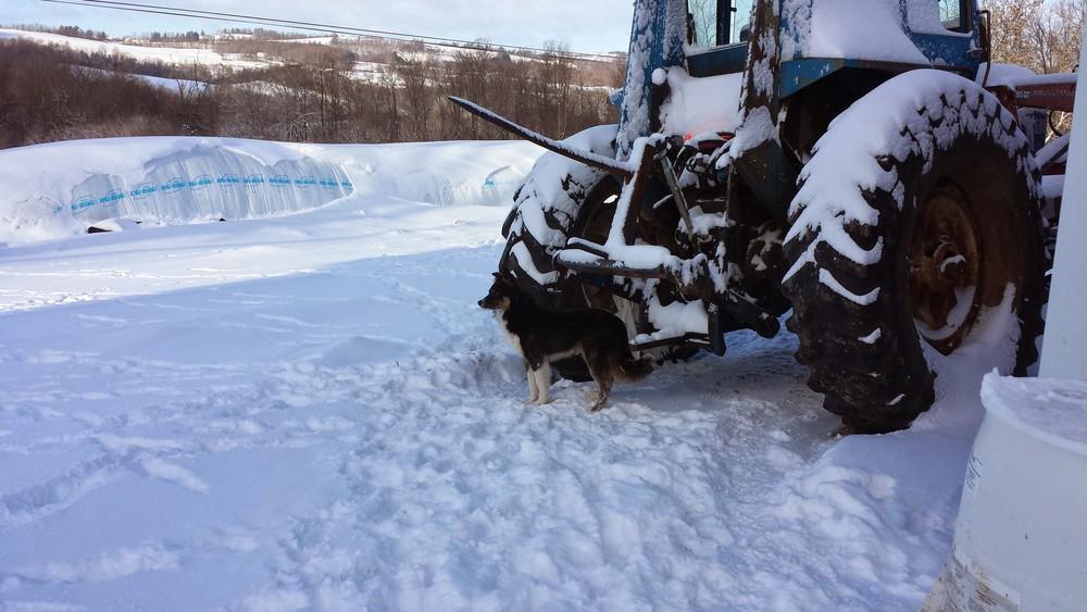 Snowy Tractor.jpg