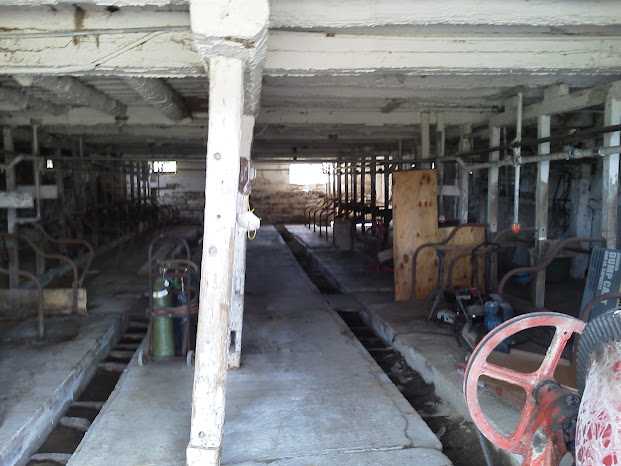 The inside of our first barn. We started our herd in a tie-stall.