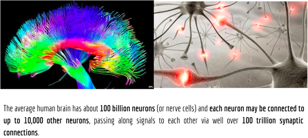 neurons of the brain.png