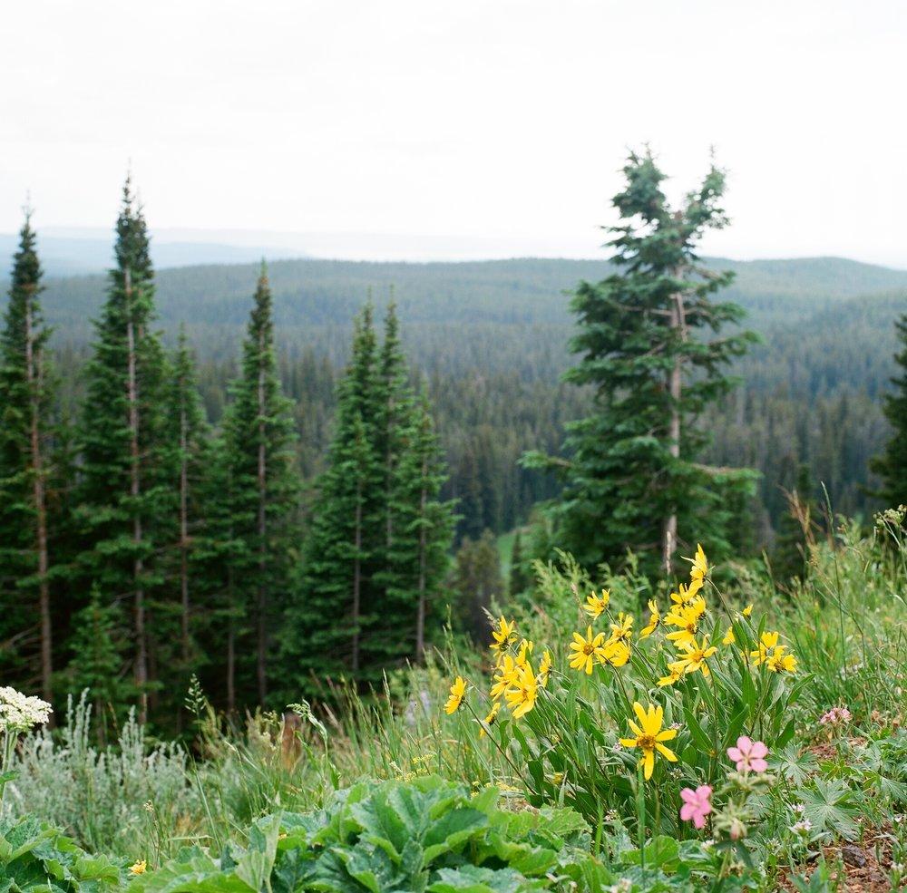 Yellowstone - 2.jpg