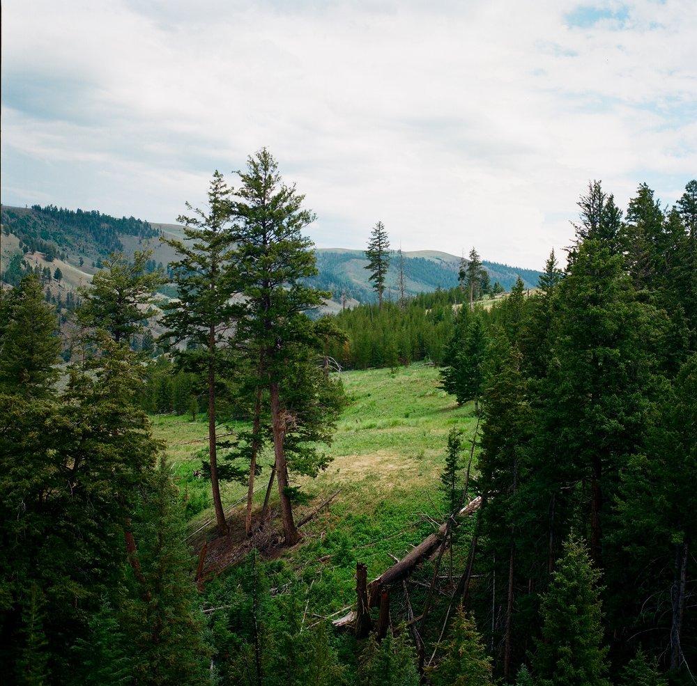 Yellowstone - 6.jpg