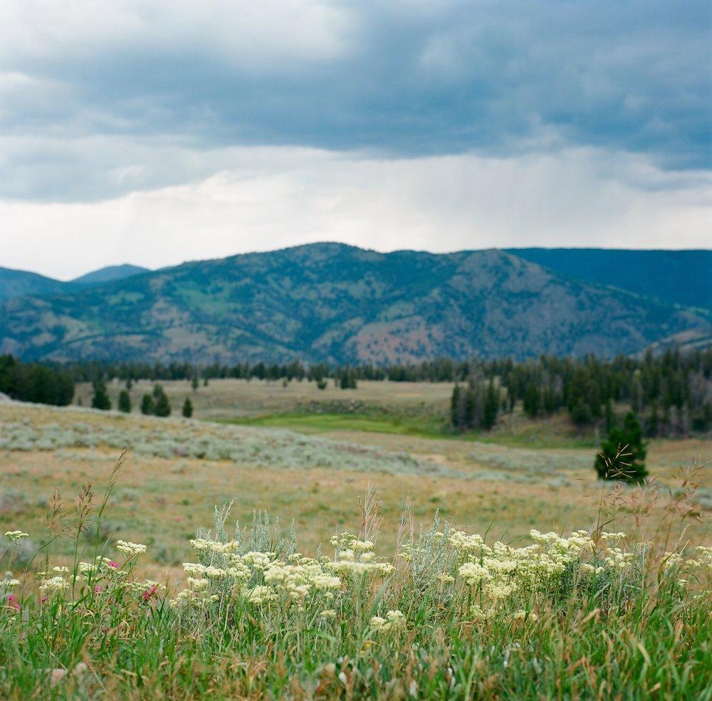 Yellowstone - 10.jpg