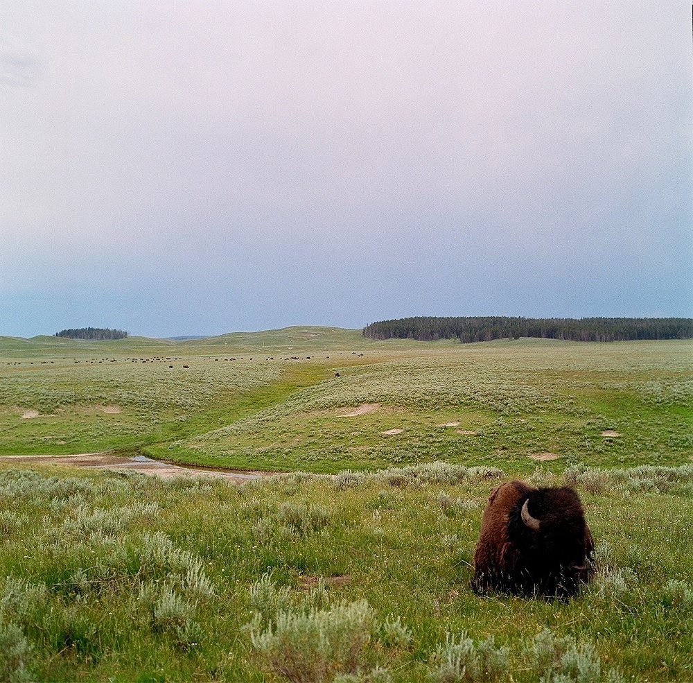 Yellowstone2 - 1.jpg