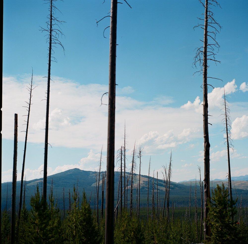 Yellowstone - 19.jpg
