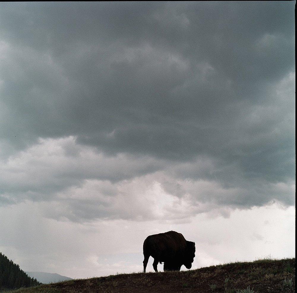 Yellowstone2 - 2.jpg