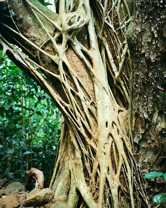 #35mm #portra400 #treeporn