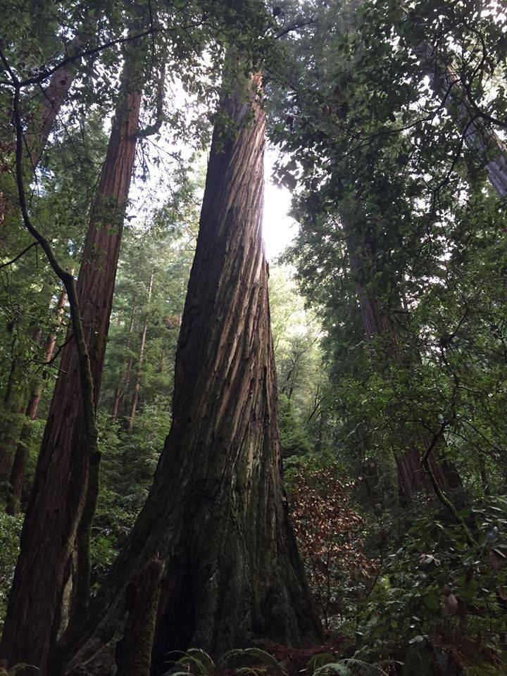 tree tree.jpg