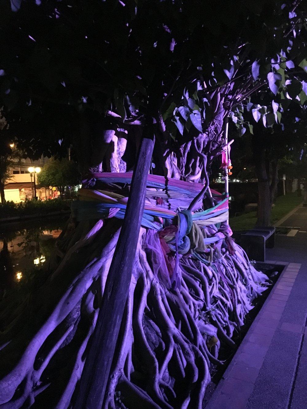 A Chiang Mai tree