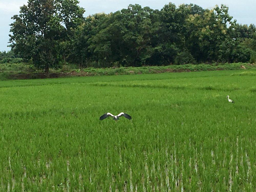 Exploring the scenery around Pai
