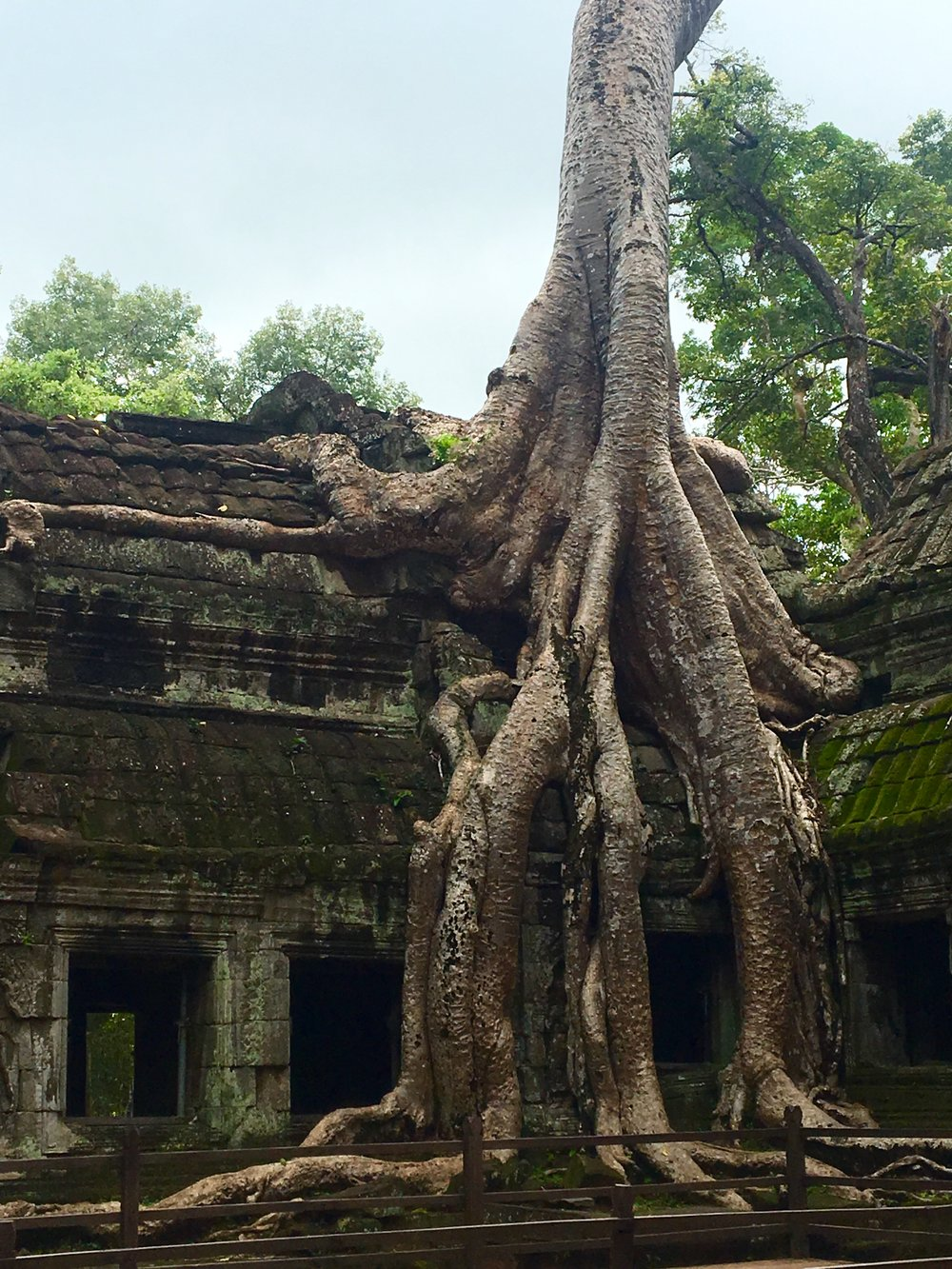 A classic scene at Ta Prohm
