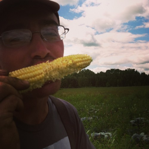 farmer Josh in sweet corn bliss