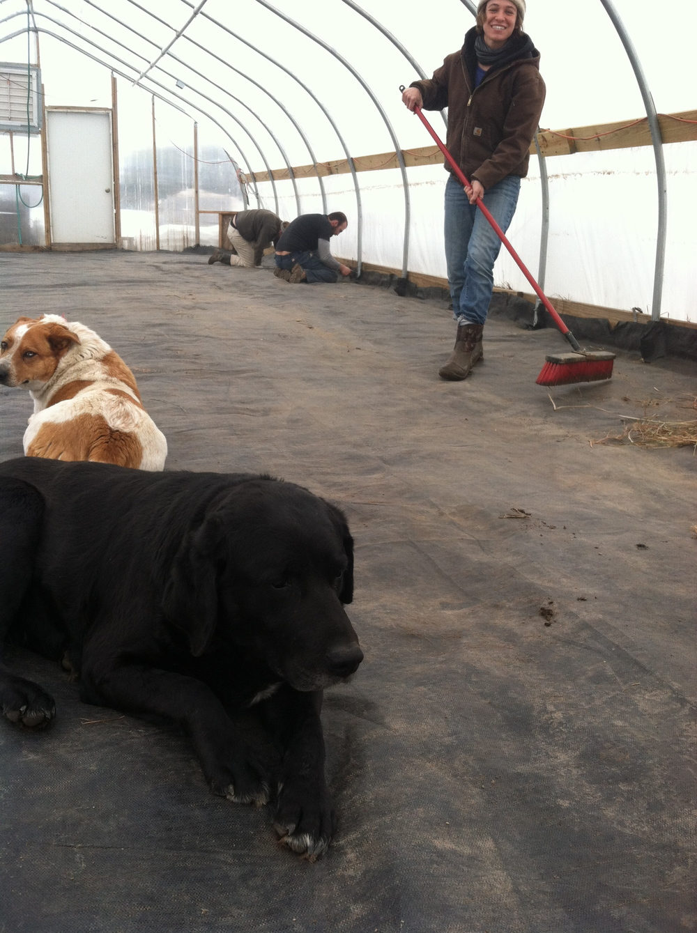 some old friends came by to help get the greenhouse prepped