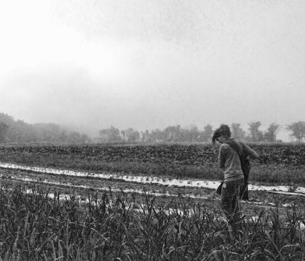 garlic scape harvest