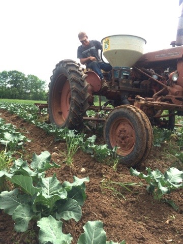 Farmer Josh cultivating the beautiful broccoli with love!
