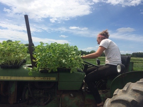 The amazing Haley driving the transplanter.