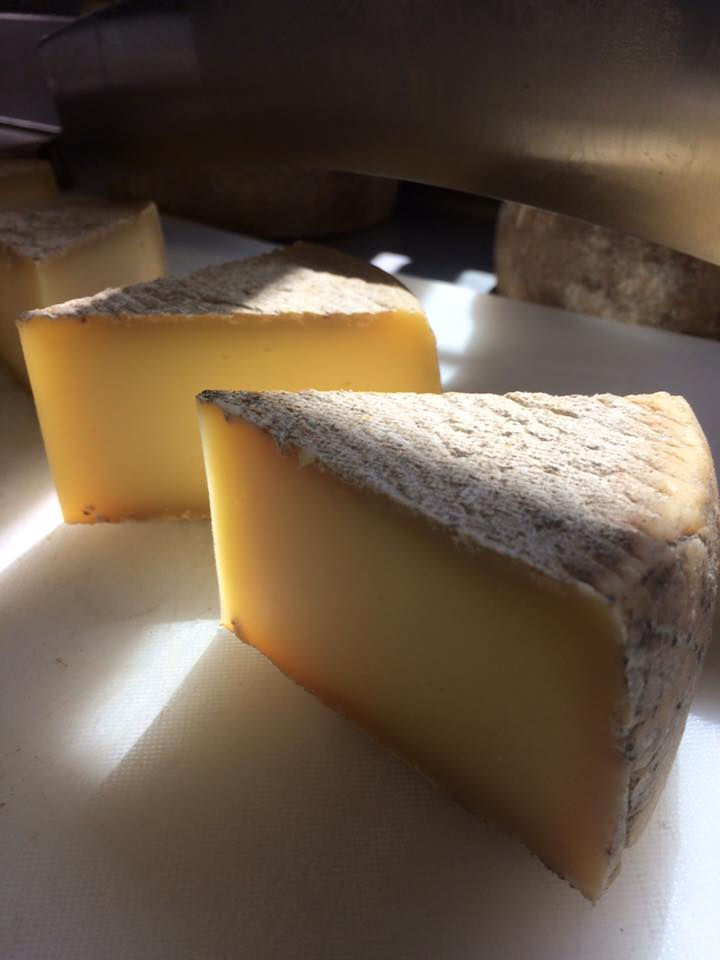photogenic cheese