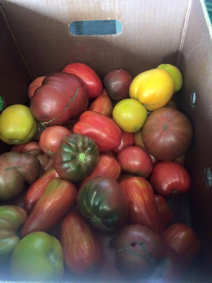 "Our ""Eat like a Farmer"" members got the first taste of ripe heirloom tomatoes."