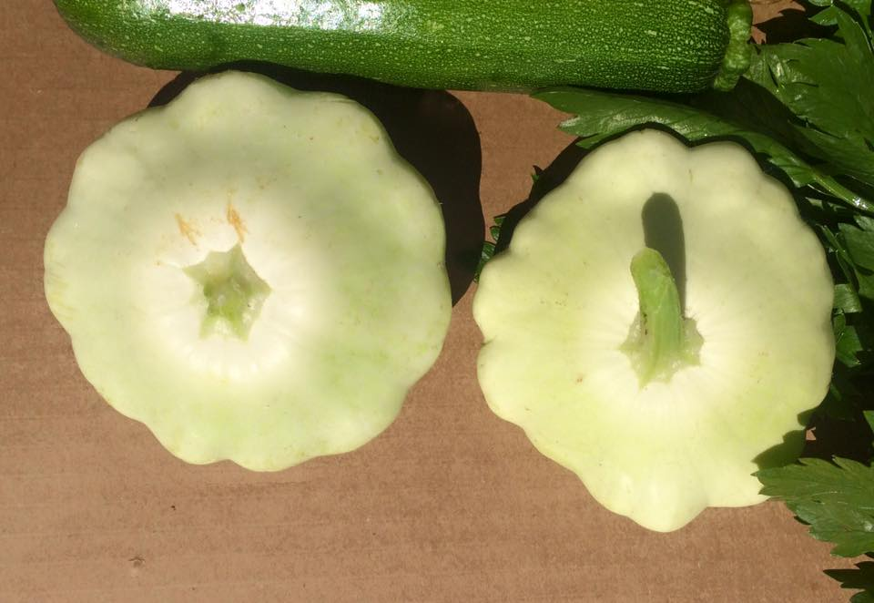 What are these flying saucer things?  Patty pan squash!  Use as you would zucchini or summer squash.