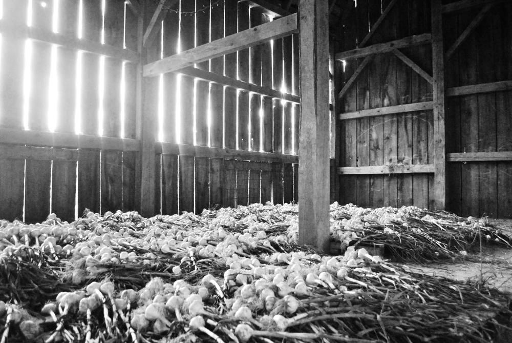 a barn full!